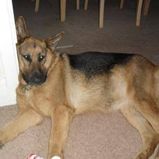 PIC:Indie,dog stolen when thief took her owner's van today in #Brighton.Police looking for red Fiat Diablo AKO5 DZZ https://t.co/auyo9PyXRC
