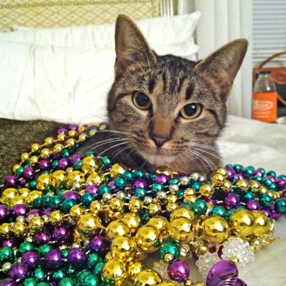 https://pbs.twimg.com/media/CayPnACWcAAUSiD.jpg