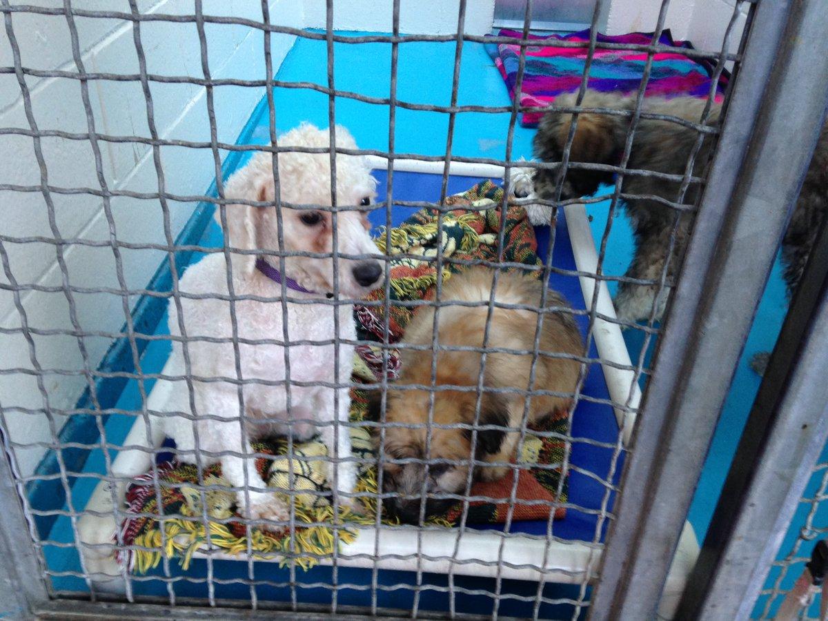 Dog Breeding Crates Canada