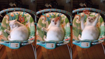 RT @mashable: Fat cat thinks he's a human baby in this toy swing https://t.co/aJ1LVKgVEH https://t.co/Tq4gaeBEdA