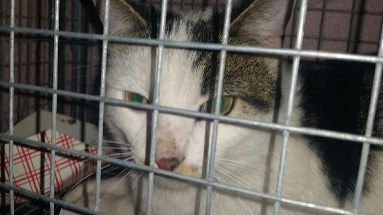 Driver, the scalded cat, is