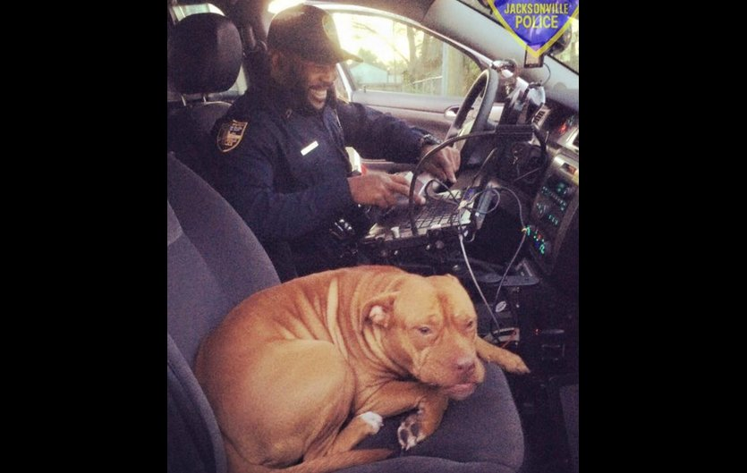 Florida officer surprised when pit bull hops in his car to get warm