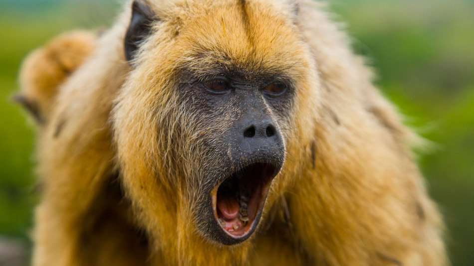 RT @mashable: Howler monkey pops up on the streets of an Ohio suburb https://t.co/RkGufCBvY9 https://t.co/MeoiUZXpLz