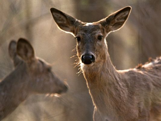 Tennessee. hunters banned for life after killing 40 deer, taking graphic photos