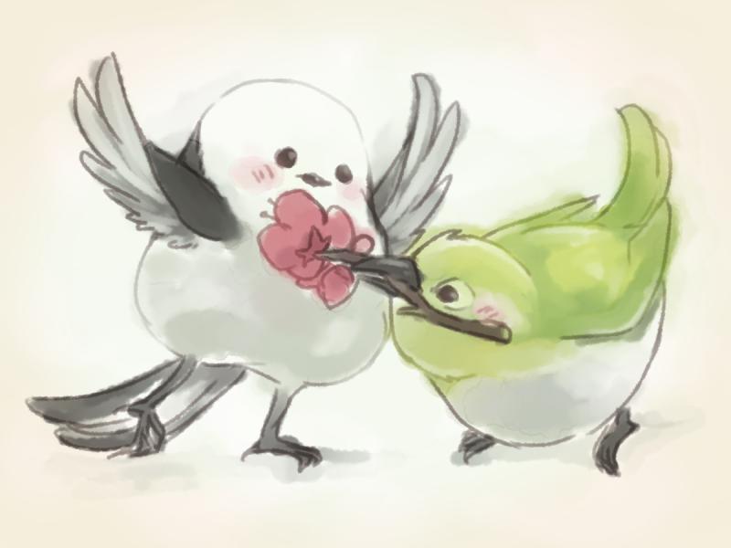 おぱんこ On Twitter 可愛い鳥同士が絡んだらそれはもう可愛いだろうな