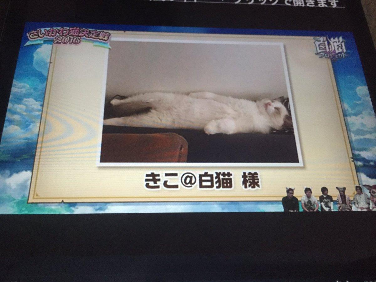 【白猫】「さいかわ猫決定戦2016」開催、さいかわ猫が決定!優勝に輝いた猫は制作期間2ヶ月ほどで配布キャラとして登場!メロディア神気も同時に!