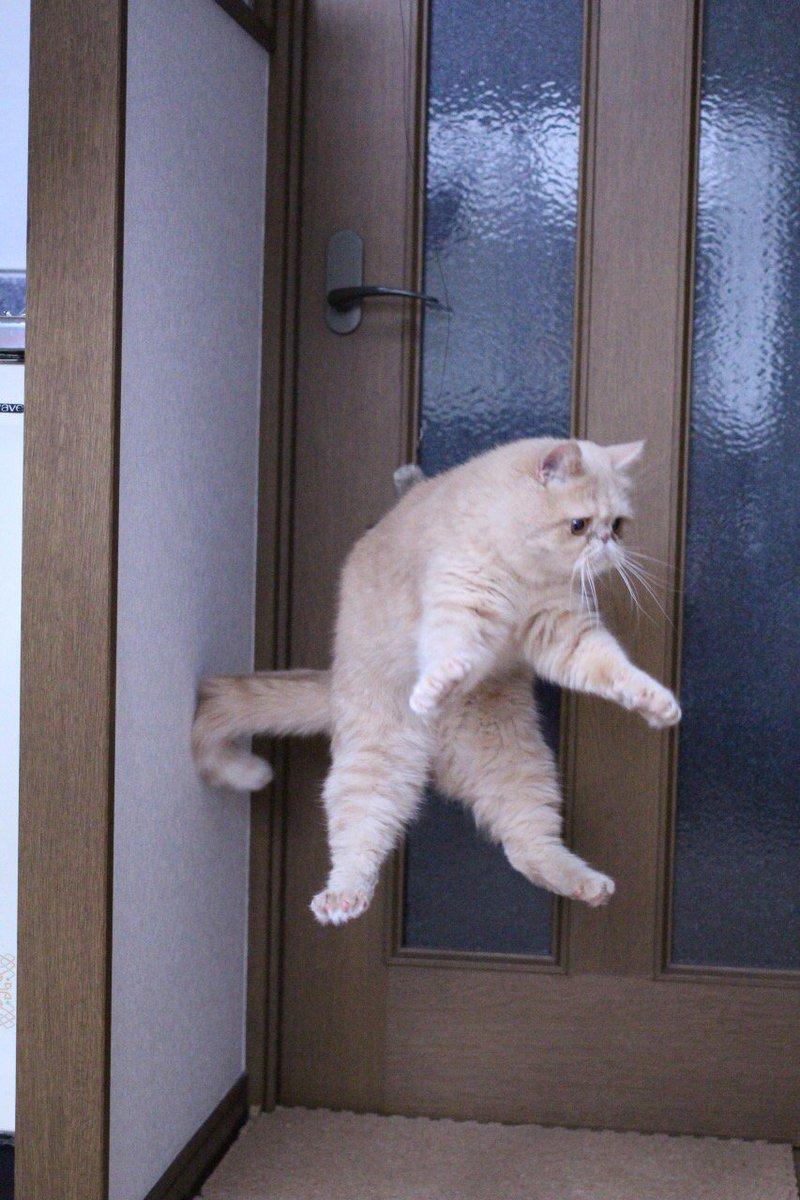 猫の日なので、たかし置いておきますね pic.twitter.com/HUSoul84LZ