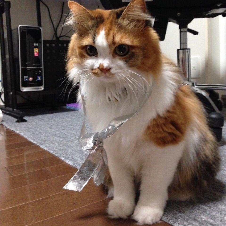 【白猫】配布キャラとして登場予定さいかわ猫の性別はメスである事が判明!元捨て猫で種類は不明、名前は「すず」ちゃんとのこと!【プロジェクト】