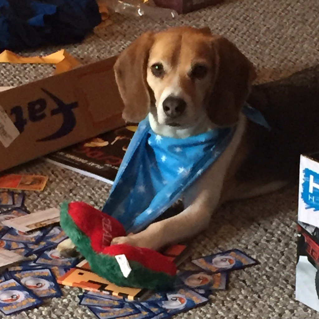 Beagles @GMA #topdog #favoritedogbreed https://t.co/3SIukrwBcu
