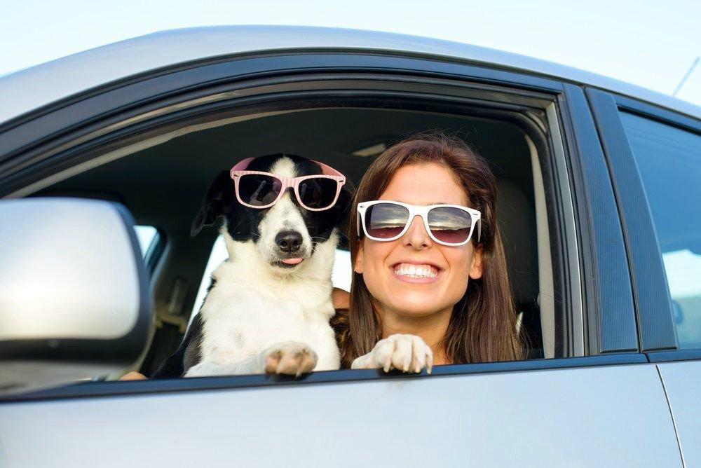 ¿Cómo se debe llevar a las mascotas en el auto? https://t.co/H3of0jRpQZ https://t.co/SBkWUVlX48