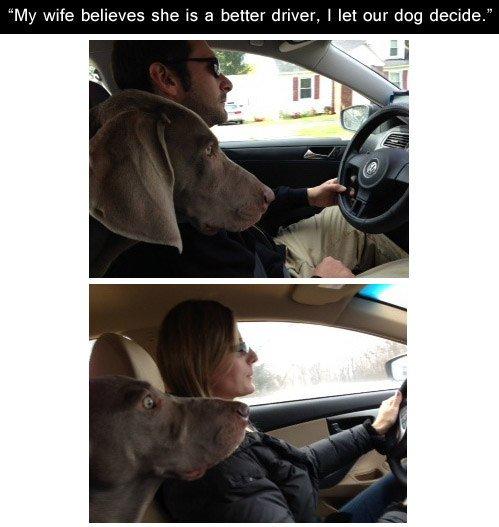 The dog doesn't lie. https://t.co/UGIrc8dnjk