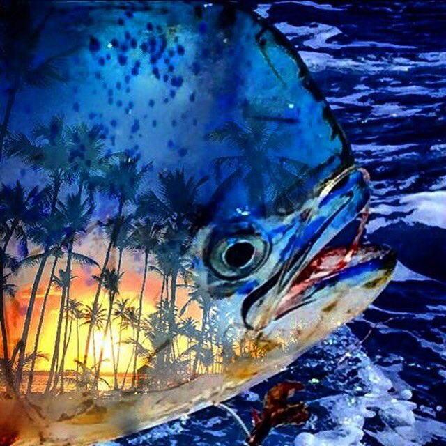 Guy Harvey On Twitter Cool Tattoo On This Dolphin Credit Andy Bagwell Guyharvey Https T Co Ubkh92emqp