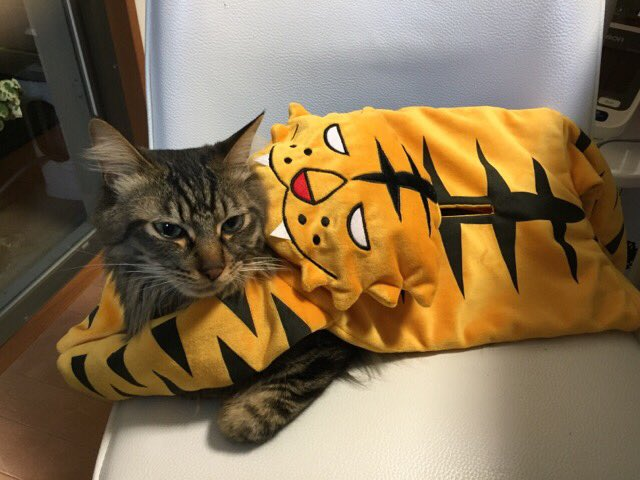 #タイバニ猫部 #タイバニ文化祭  このあとぐったりタイガー噛まれてましたΣ(ノ∀`*)