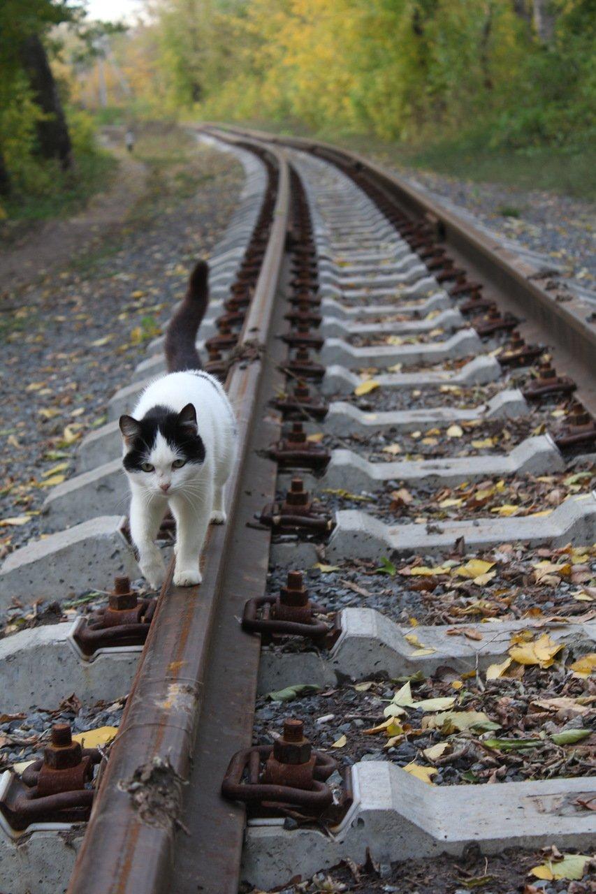 Фото прикольные едут домой на поезде