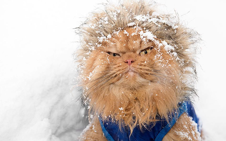 картинка замерзший котенок можете поплавать