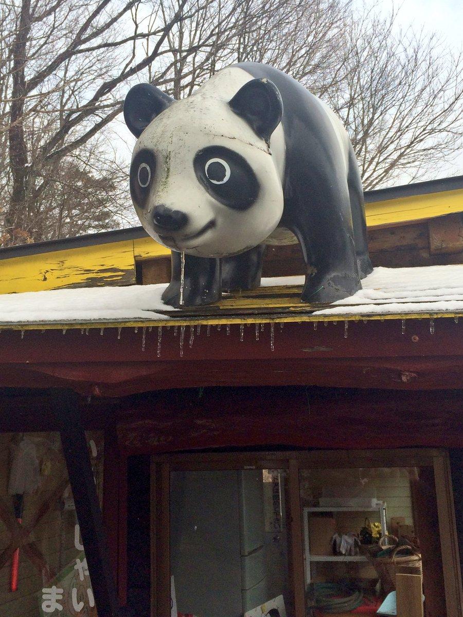 キツネ村に何故かパンダがいたんだけど、ちょうどいい位置にツララが出来てて「どうしようもなく飢えていた時に美味しそうな獲物を見つけてしまった顔」感がやばい。目がイッてる pic.twitter.com/Yjibgucj0o