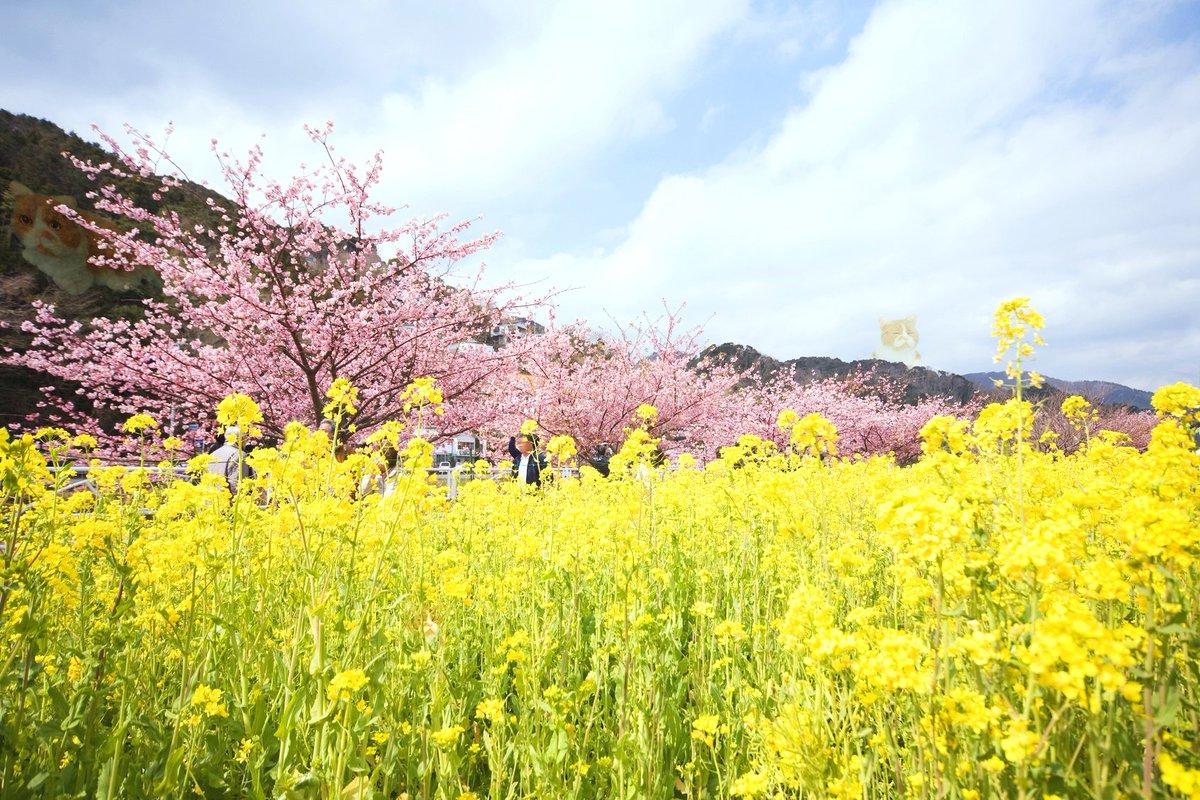 ふてニャンを探せ!わかったら「いいね!」を押してください♪  春の足音が近づいてきましたね(´▽`)♡ #ワイモバイル #ふてニャン