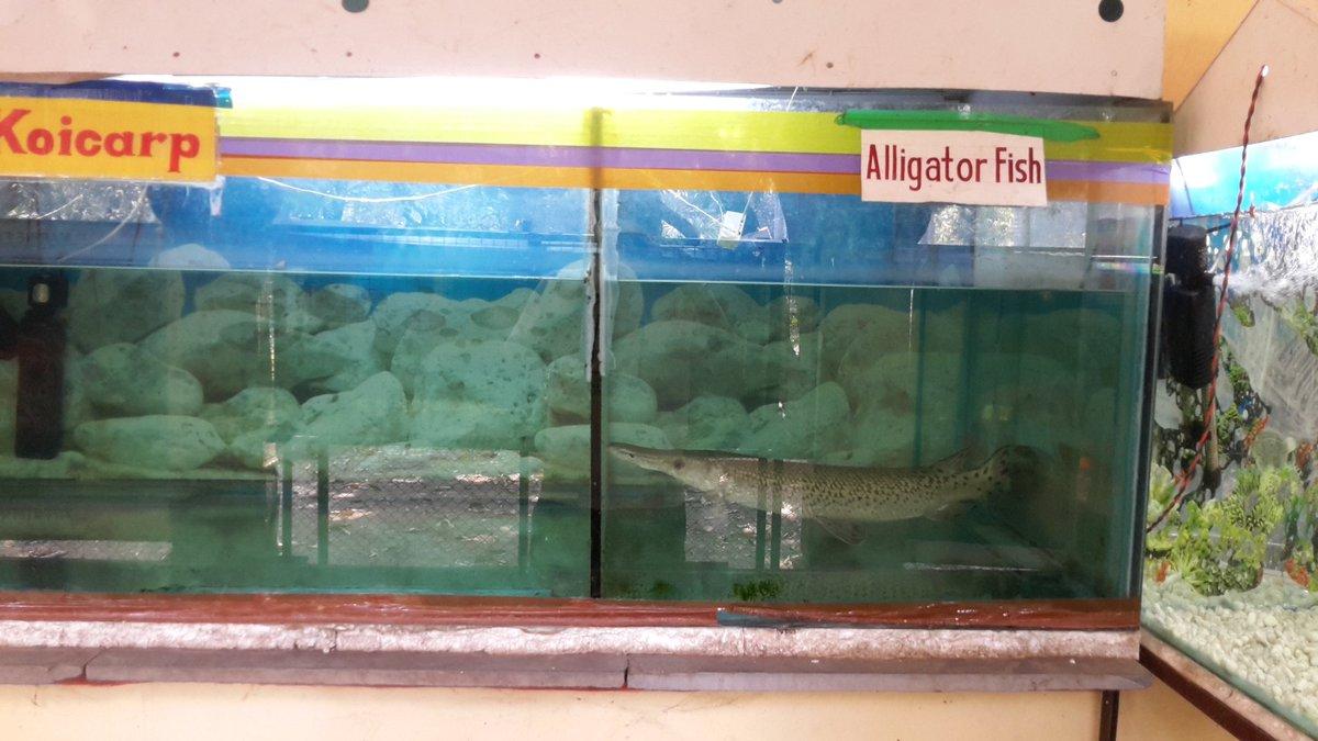 Fish aquarium in nagpur - Fish Aquarium In Nagpur