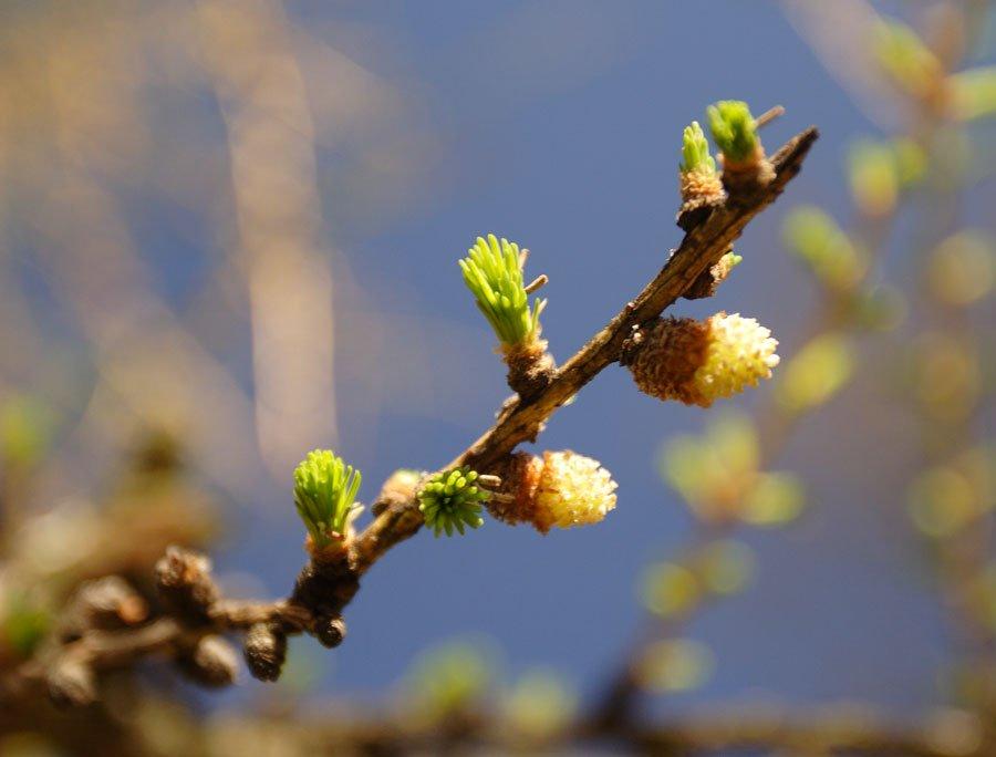 Весна идёт! Весне дорогу! https://t.co/3cU5dtfEKj #весна #подснежники #скоро #тепло #счастье #скоровесна #красота https://t.co/e1oJKPom4x
