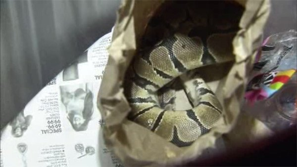 Snake found in trash can at SEPTA train station-