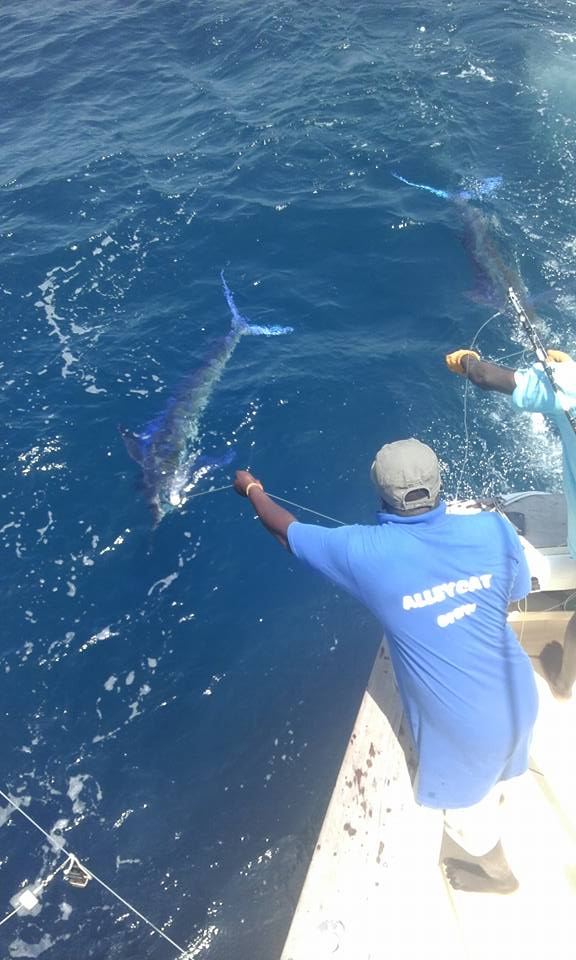 Watamu, Kenya - Alleycat went 2-4 on Striped Marlin and 1-2 on Sailfish.