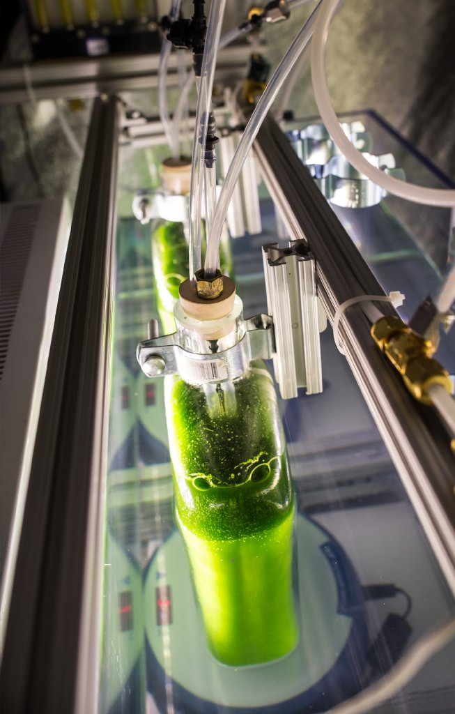 NREL scientists explore biorefinery process proven more effective at producing algae ethanol https://t.co/RG1qBK0DE6 https://t.co/CD2fmRrWni
