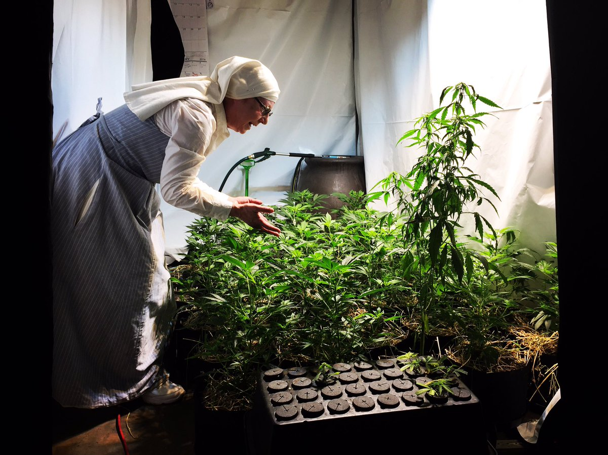 Today on TheNOW, you can't make this stuff up...nuns who grow and sell illegal weed products. Story at 4pm!