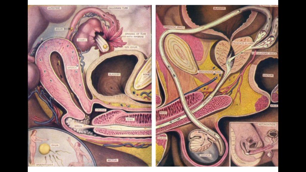 Anatomy of sex artist