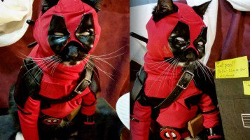 RT @mashable: Chaotic neutral cat effortlessly pulls off Deadpool cosplay https://t.co/BKWSOYwUJD https://t.co/dqek8e4VMS