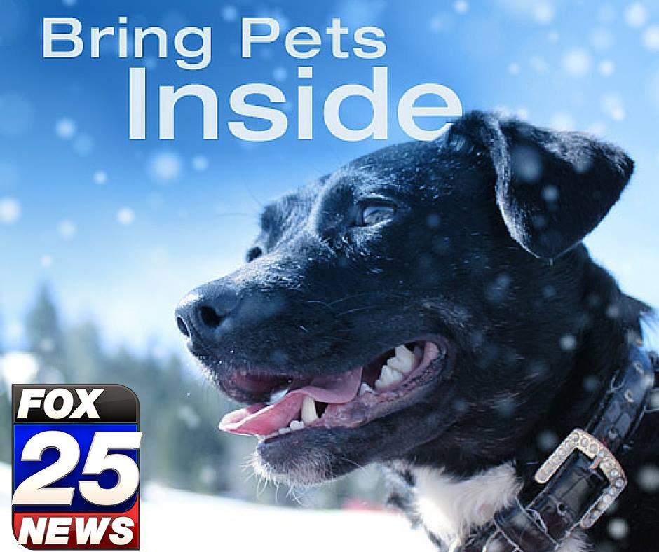 Don't forget your fur babies! @Klemanowicz is tracking DANGEROUSLY cold temps and snow this weekend on FOX25 at 10.