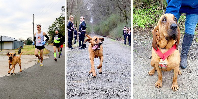 Amazing Dog Runs Off To Compete In Alabama Half Marathon – Finishes In Seventh Place https://t.co/ictlratP4u https://t.co/BFmcfryuf1