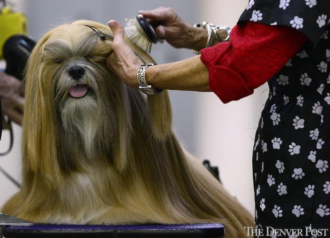 Denver Dog Show scrutinizes 3,000 dogs in 184 breeds