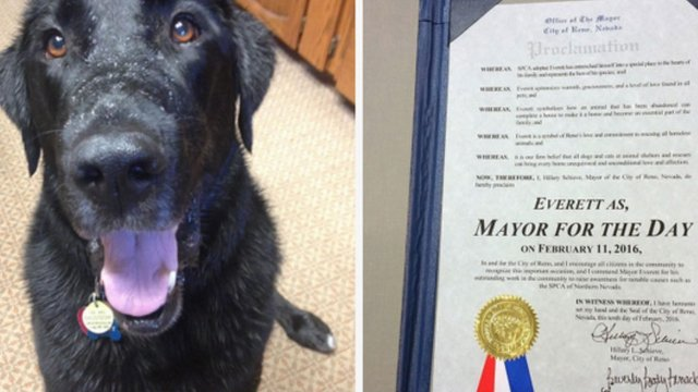 Rescued dog becomes mayor for a day