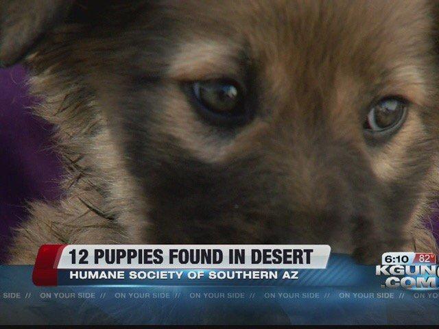 Twelve puppies abandoned near Bisbee, other adoption events this weekend:@kgun9