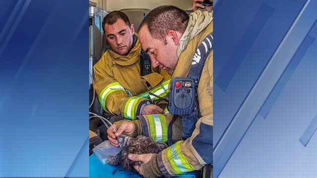 These Eloy firefighters are heroes to one little dog trapped in a fire! azfamily