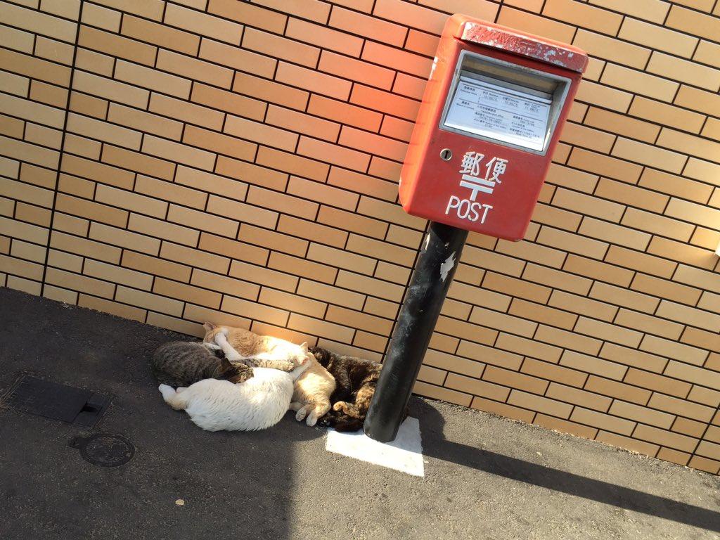 近所のセブンにて 地域ネコたちが 陽だまりで 「ネコたまり₍˄·͈༝·͈˄₎◞ ̑̑ෆ⃛」 になって…