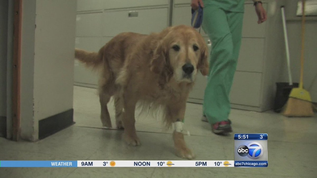 Cancer vaccine for dogs may have use in children, research says
