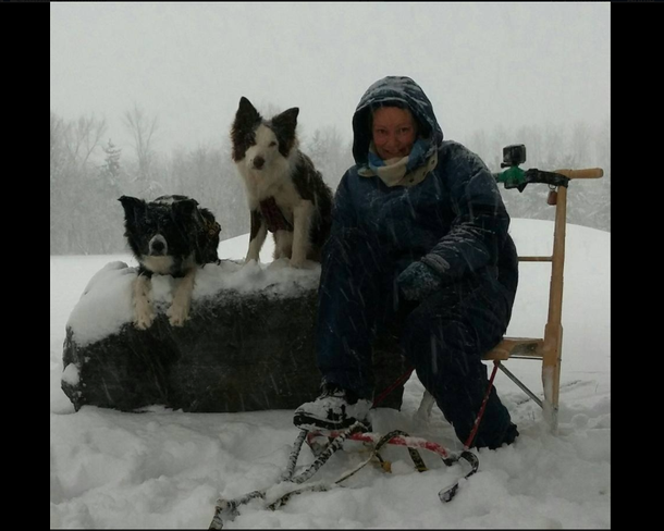 Woman ditches car, gets coffee in drive-thru with dogsled