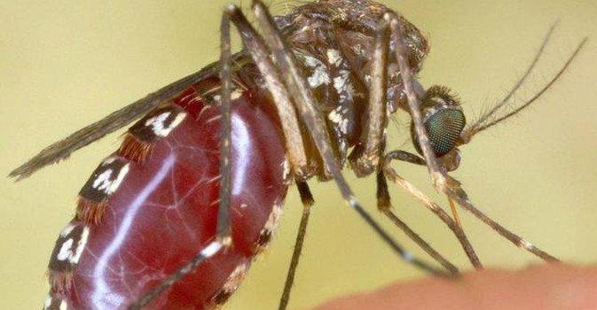Virus Zika: aumentano i contagiati in Colombia