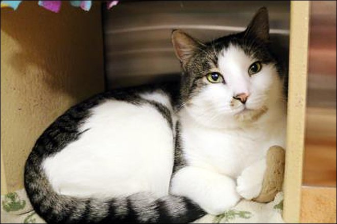 10 adoptable cats from @SeattleHumane Caturday -