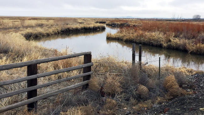 After the Oregon standoff, a new occupation begins – this time it's the birds