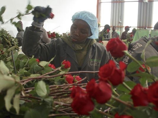 Valentine's Day flowers might just be from Kenya