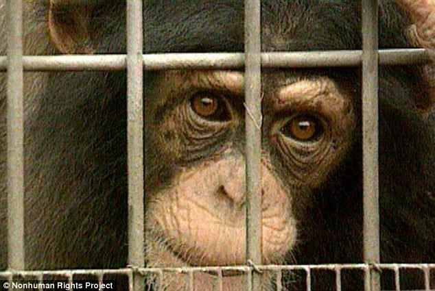 Unlocking the Cage, film documentario per evoluzionare la coscienza