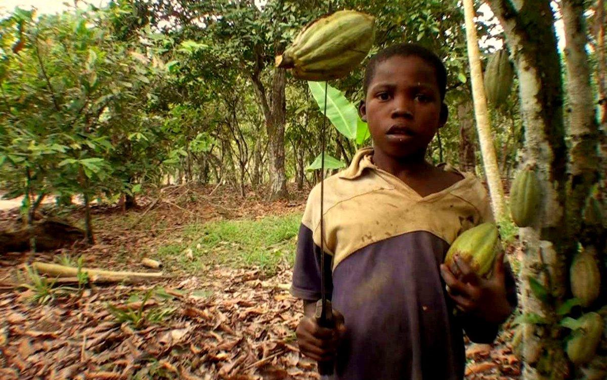 Çikolata Endüstrisinde Çocuk İşçi Sömürüsü Ve İnsan Kaçakçılığı