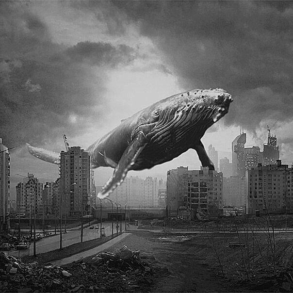 Картинки с надписью киты умирают в лужах бензина, смешные самые
