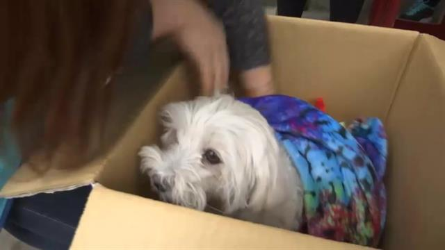 WATCH: Dog found alive, rescued from amongst the rubble of Taiwan's earthquake after 4 days