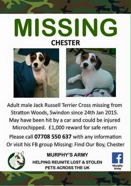 RT @LisaLisaw1: Please RT #HelpFindChester #MISSING #StrattonWoods #Swindon #REWARD @FindOurChester @ElizabethHurley @mrjakedwood https://t…