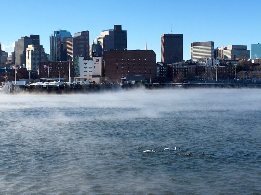 Boston, I love you even when you're -8. Sea smoke, the skyline, and a couple of swans.