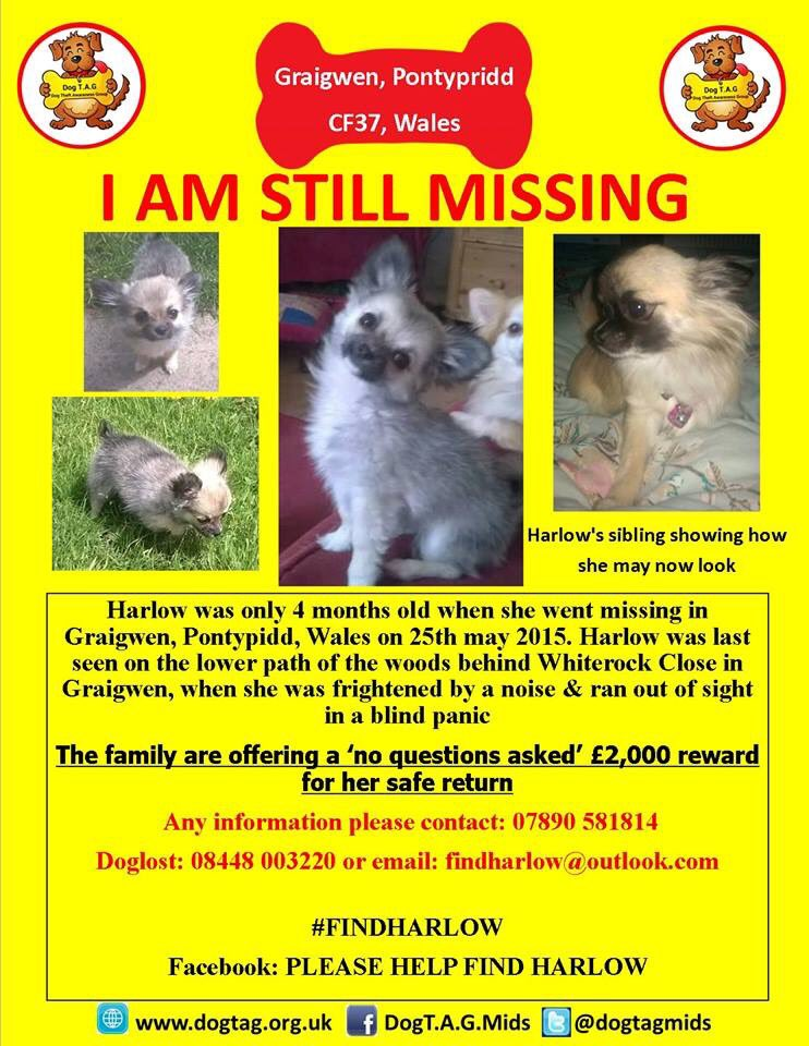 RT @GHarriesmum: Please RT #HelpFindHarlow - we need her home !! @RSPCA_official @OfficialZoe76 @OfficialClancy @PamStClement01 https://t.c…