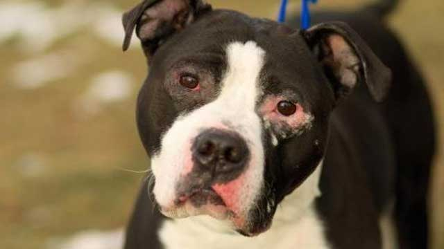 This week's MSPCA-Nevins Farm Pet of the Week is Burke the dog. 7News